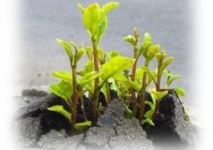 cropped-plant.jpg